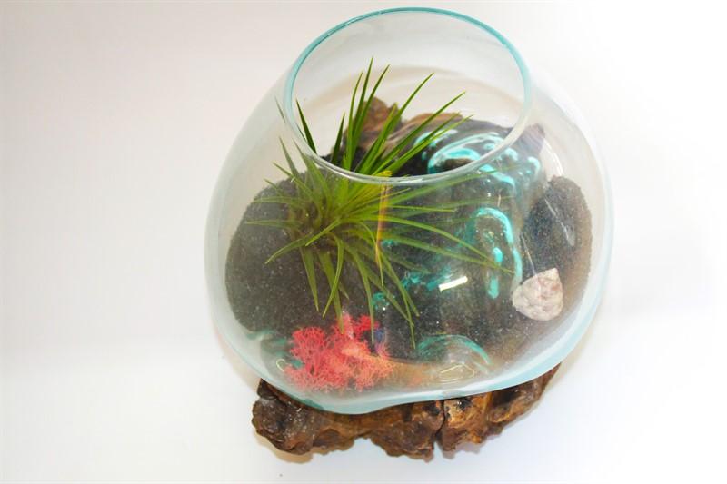 """טרריום צמחים זכוכית 24 ס""""מ על גזע עץ עם צמח אוויר"""