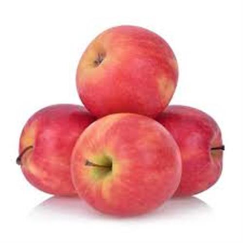 תפוח עץ סאן דאונר - ללא דונג ללא ריסוסים