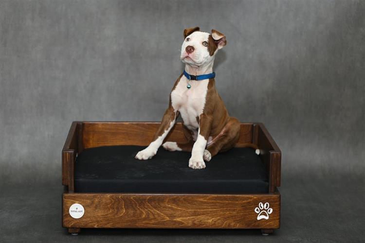 מיטה לכלב- דינגו S חום