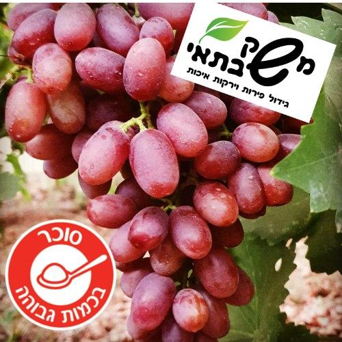 """ענבים אדומים מתוקים ללא גרעינים 1.2 ק""""ג"""