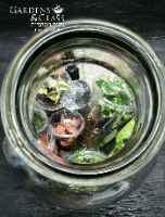 ערכת טרריום 20 ליטר