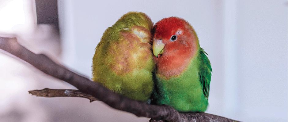 ציפורים - המחסן של חיים