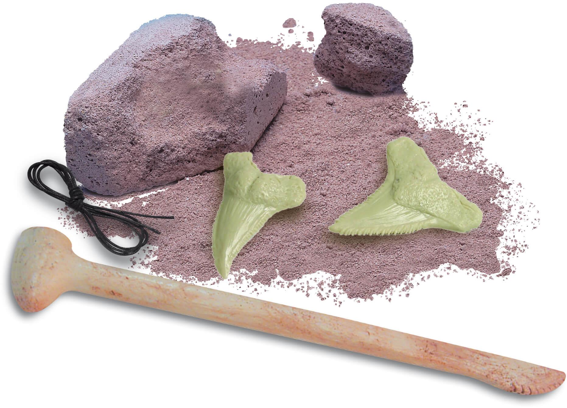 ביצת ארכיאולוג - שן כריש זוהרת
