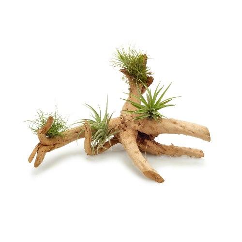 עץ וצמחים