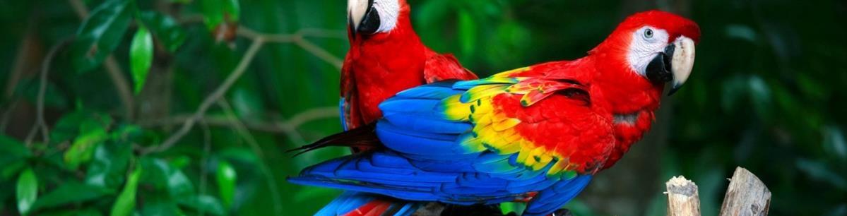 מזון לתוכים וציפורים - המחסן - מוצרים לבעלי חיים
