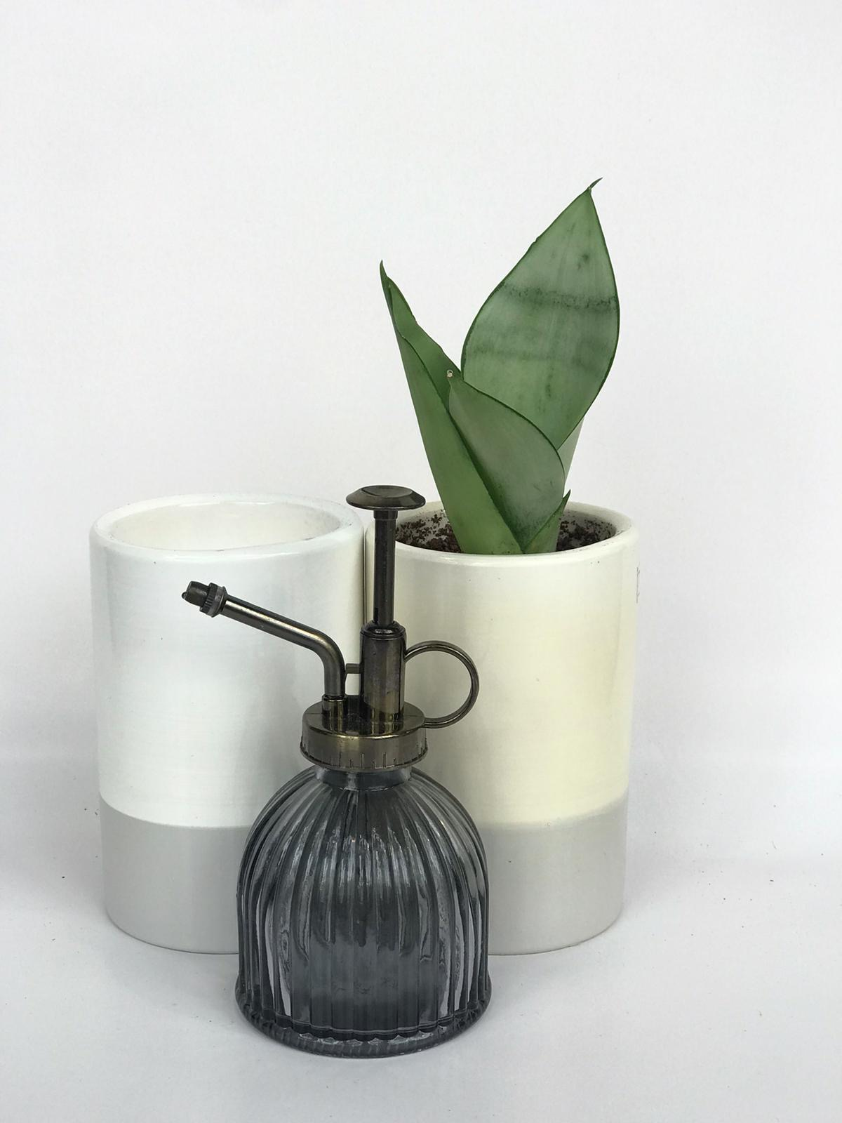 little garden gift - gray - אזל מהמלאי