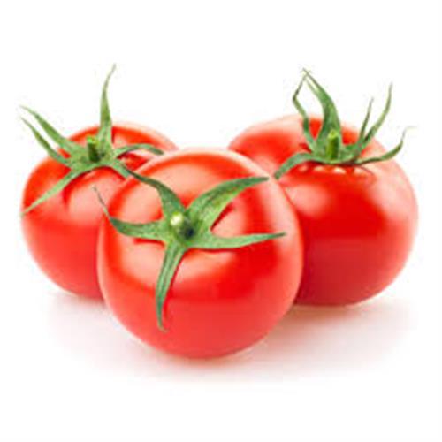 עגבניה חממה