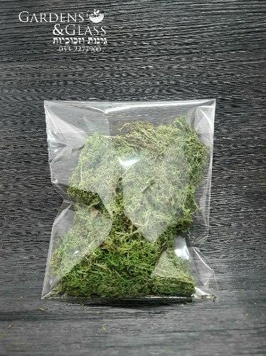 מוס ירוק חאקי
