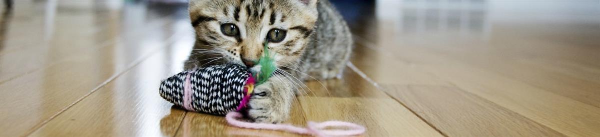 צעצועים לחתולים - המחסן - מוצרים לבעלי חיים
