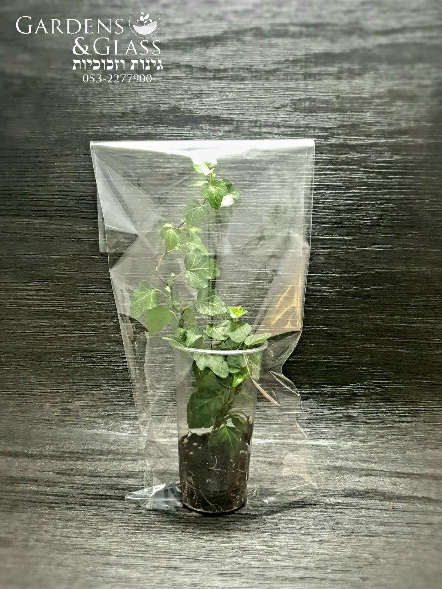 קיסוס כוס 3 שקית