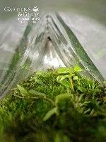 טרריום קיר ירוק
