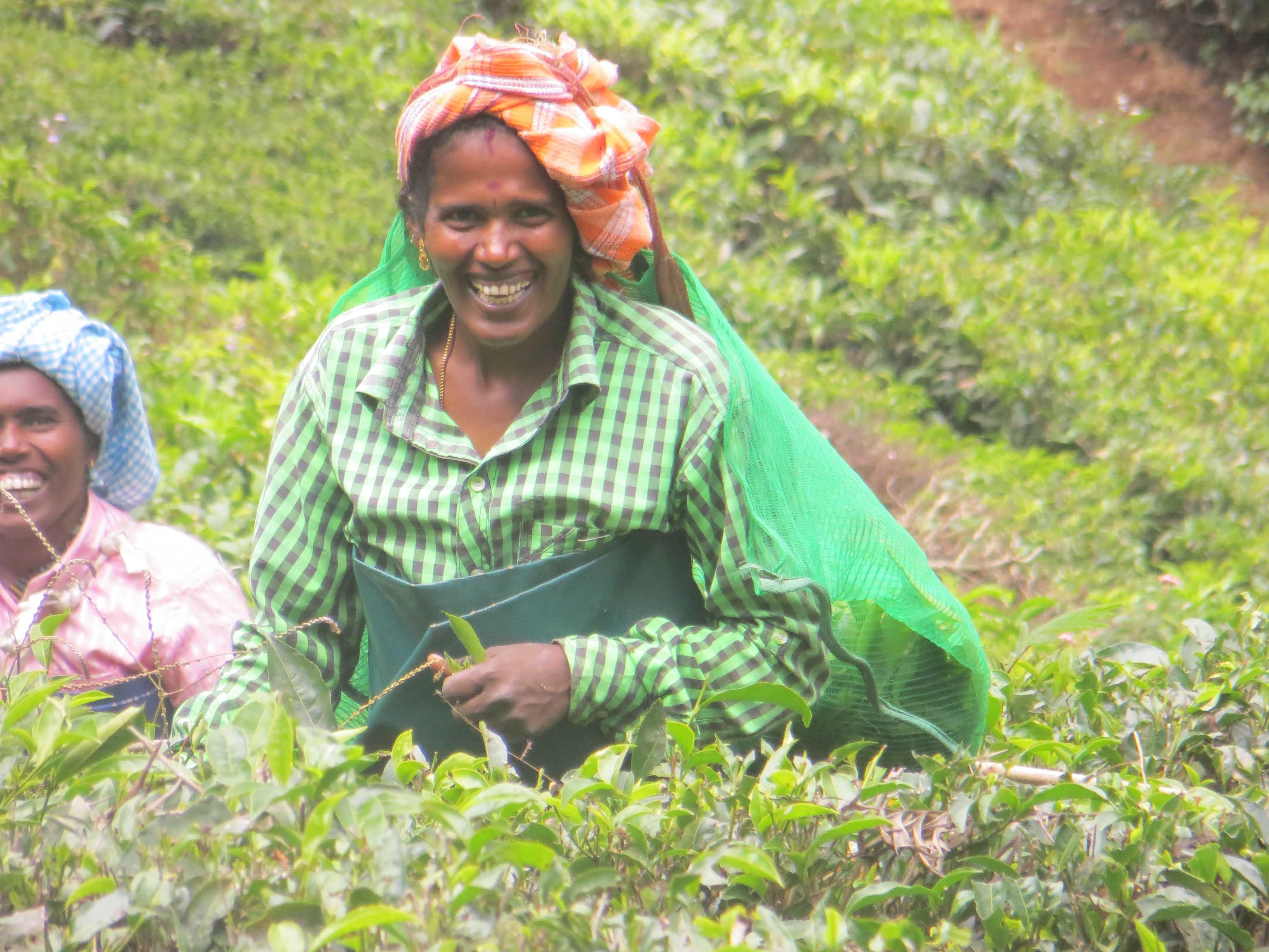 עובדות במטעי התה מונאר