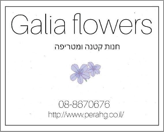 משלוח פרחים באשדוד |חנות פרחים באשדוד|חנות קטנה ומטריפה |www.perahg.co