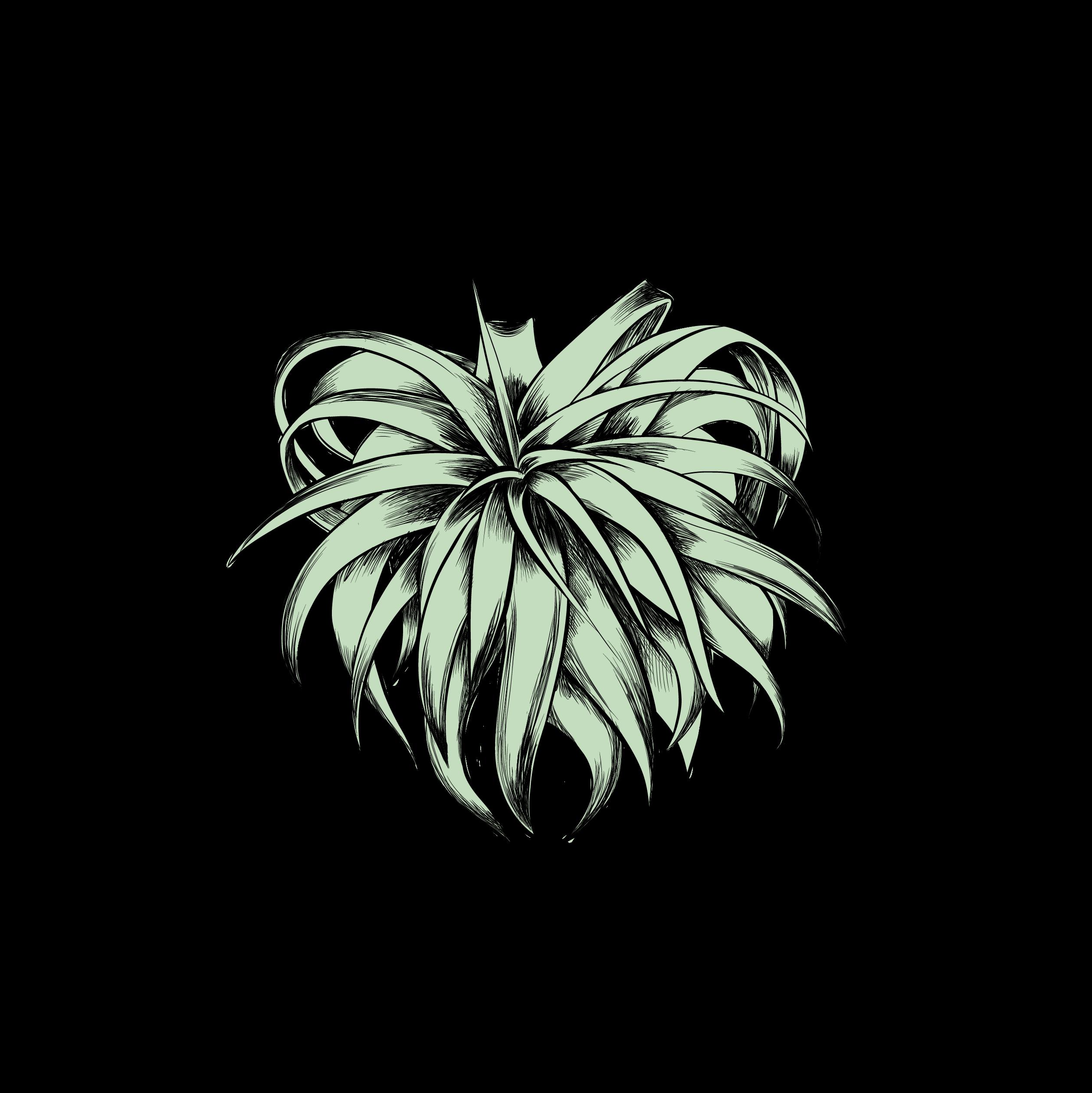 צמחי אויר