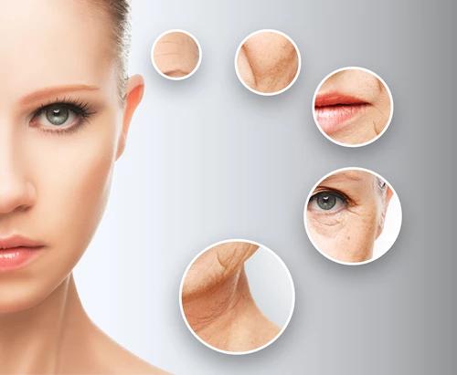 טיפולי פנים -חוה זינגבויים